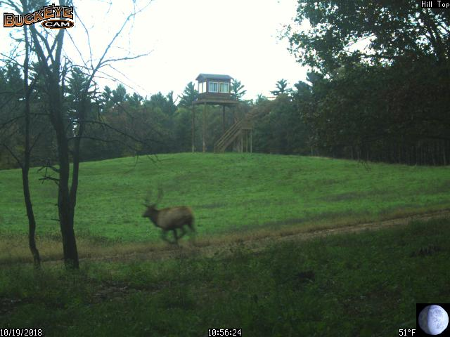 Hunting preserve trail cam still